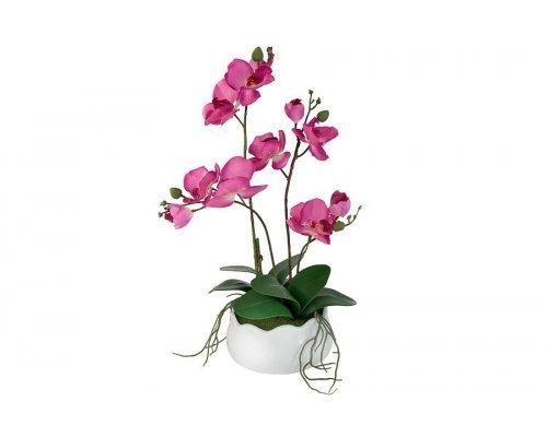 Декоративные цветы Dream Garden Орхидея бордо в керамической вазе