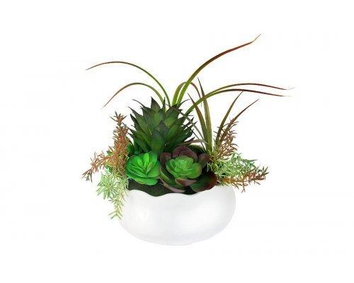 Декоративные цветы Dream Garden Суккуленты в керамической вазе