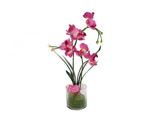 Декоративные цветы Dream Garden Орхидея бордо в стеклянной вазе