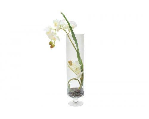 Декоративные цветы Dream Garden Орхидея белая в стеклянной вазе