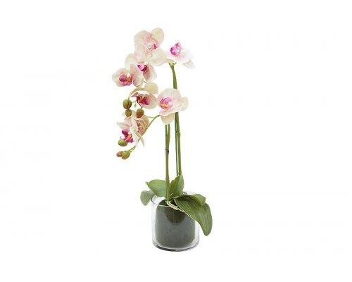 Декоративные цветы Dream Garden Орхидея светло-розовая в стеклянной-вазе